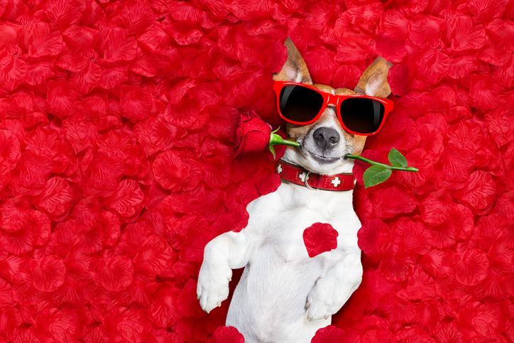 dogs and valentines
