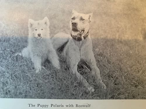Polaris and Beowulf, the Great Dane