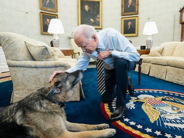 Joe Biden pets Champ in Oval Office.