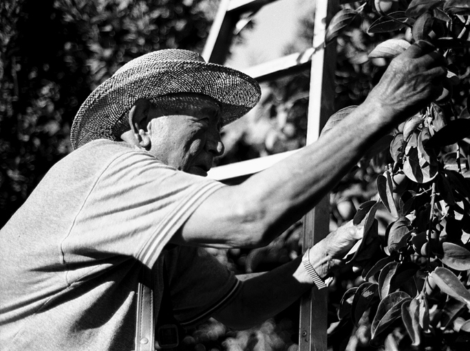 Mexican laborer,