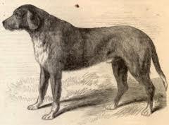 Dog Jack, Mascot