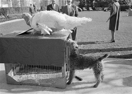 Kennedy Dog Thanksgiving Ceremony