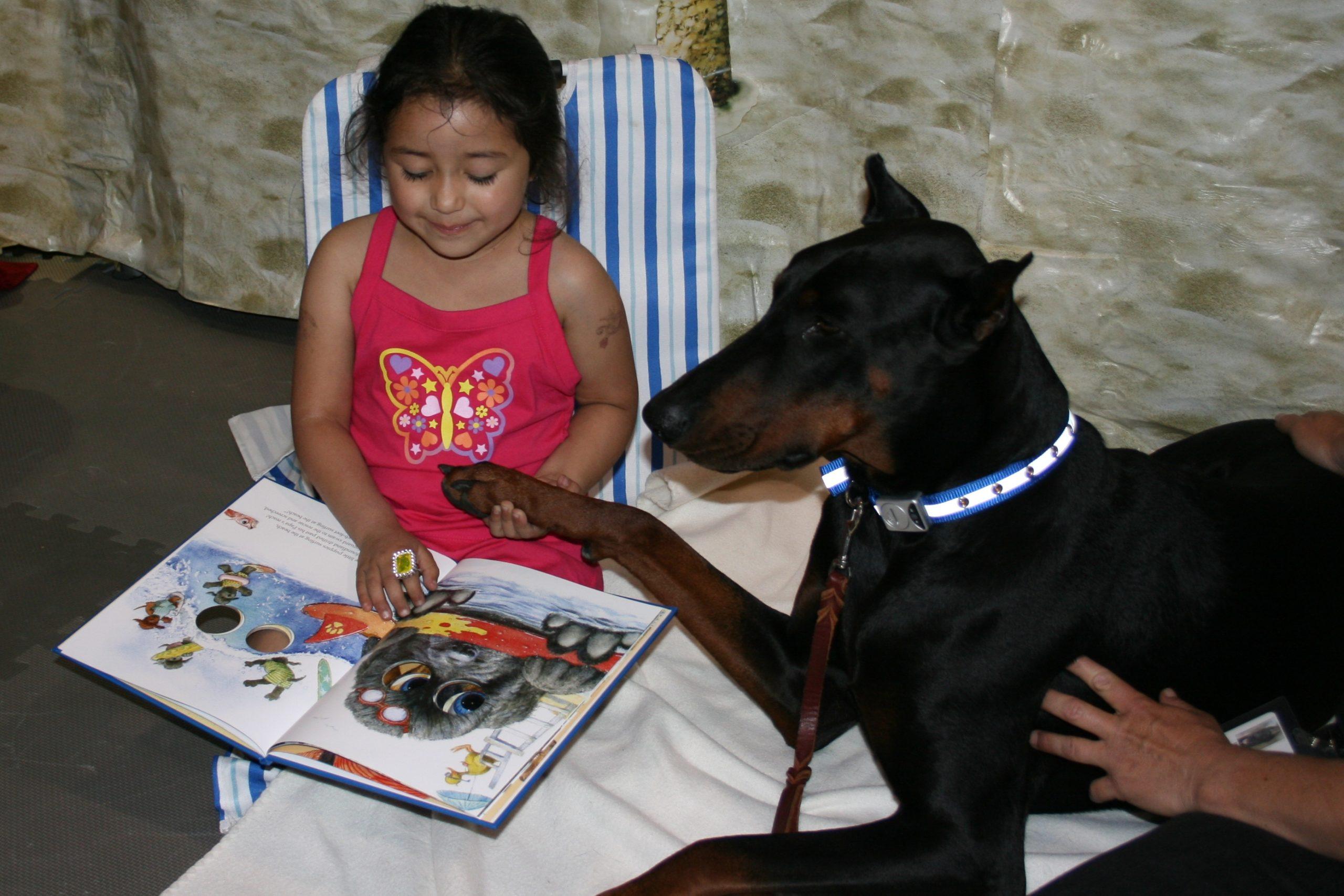 Doberman reading with BARK