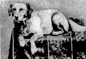 photo of Fido, the Lincoln dog
