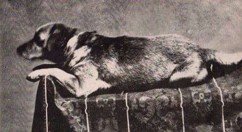 This photo is thought to be the first photograph of a presidential pet.