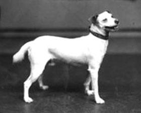 Richard Byrd's Dog