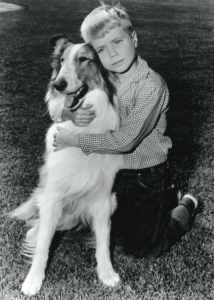 lassie-and-timmy-214x300