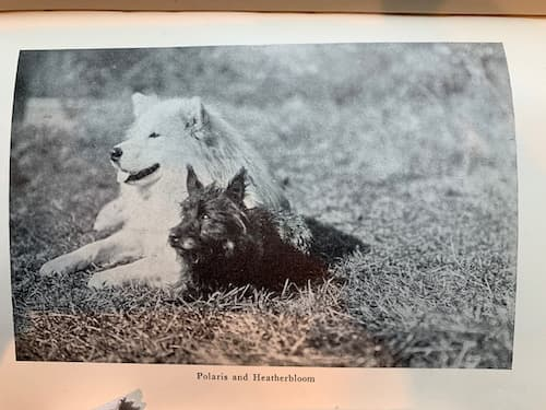 Polaris with his good friend, Heatherbloom