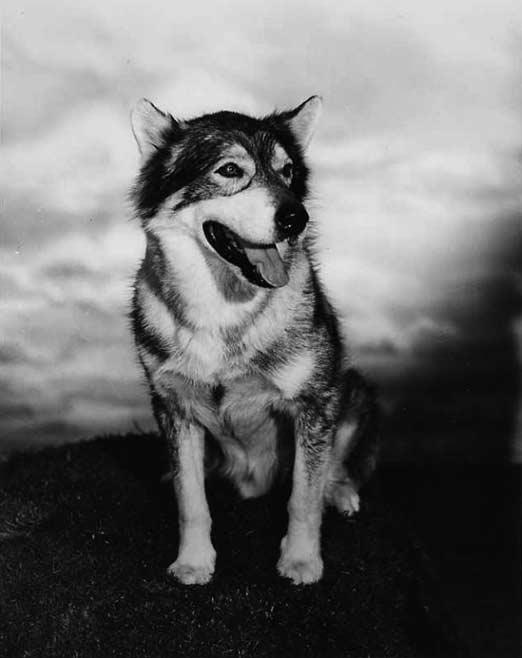 Yukon King