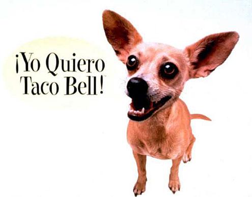 Taco Bell Dog
