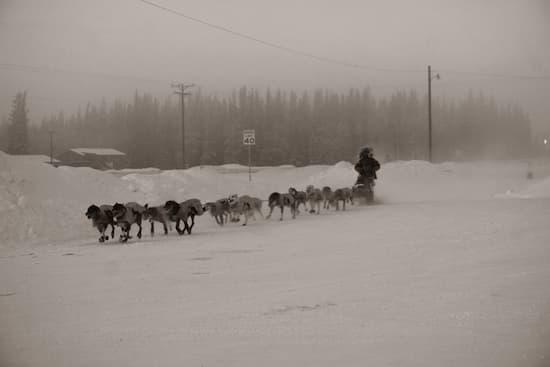Sled dog team in winter
