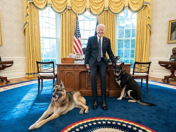 Biden dogs in Oval Office