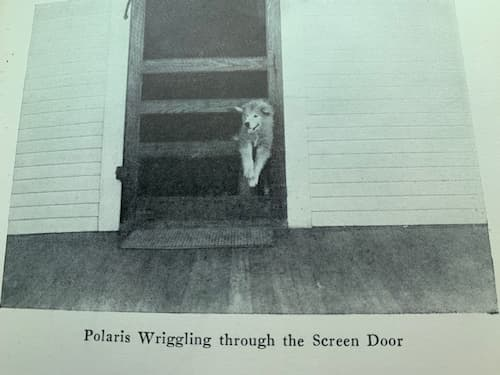 Polaris jumped through the screen door as his fastest method of leaving the house.